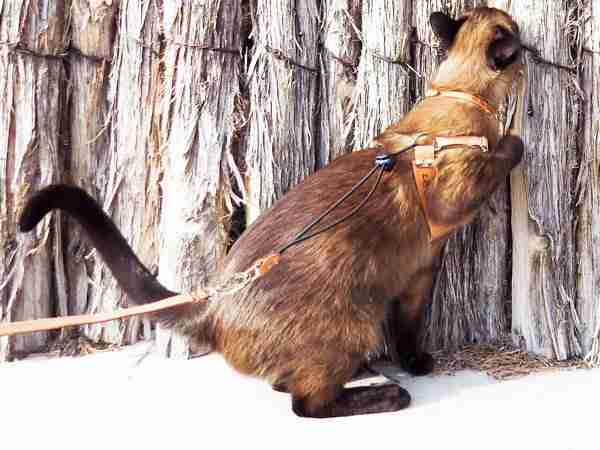 Natural Leather OutBound Cat Harness.armpit